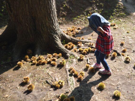 函館の栗拾い秋は香雪園