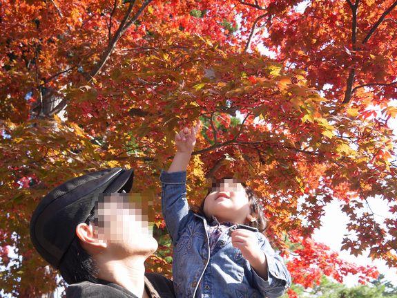 函館の人気紅葉スポット香雪園の色づき状況