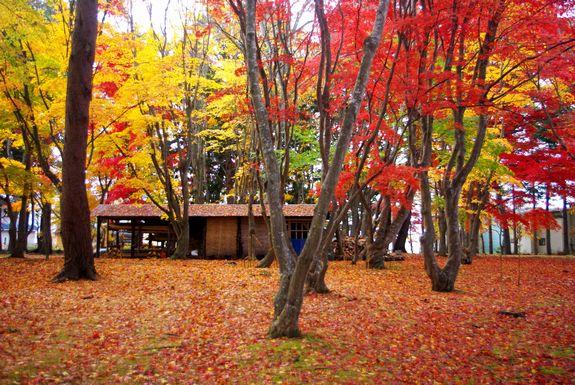 函館紅葉スポット見晴公園