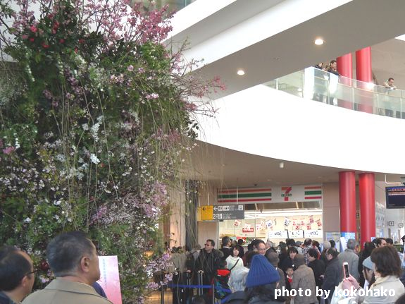 函館駅内に桜展示
