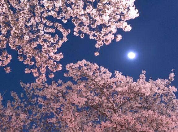 函館五稜郭公園の夜桜ライトアップ時間