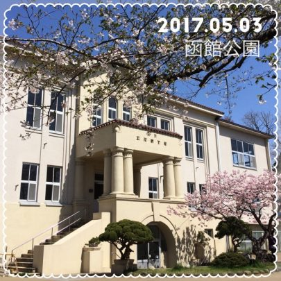 函館公園の桜開花状況