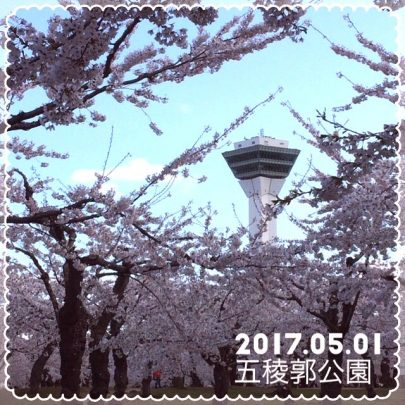 函館五稜郭公園の桜開花状況
